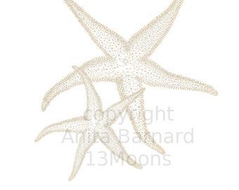 Two Cream Starfish Sweet Printable Wall Art Print