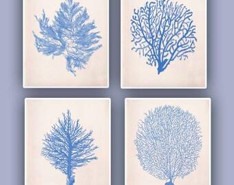 Sea fan Art, Nautical prints Sea Coral fan prints,  modern vintage inspired  by coral, kelp, gorgonian, seaweed, seashore set 4 prints 11x14