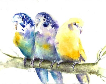 Budgie Original Watercolor Painting