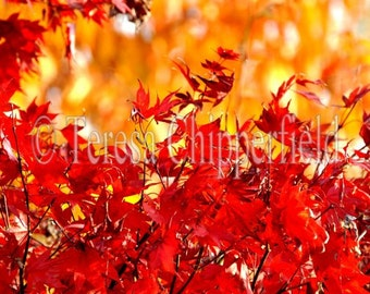 Red Fall Photography, Golden Orange Autumn Leaves, Rustic Woodland Photo, Glowing Yellow Bokeh, Portland Trees, Vivid Scarlet Home Decor