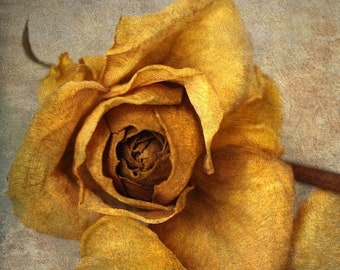 25% Memorial Day Sale still life photography nature yellow rose nursery decor gallery wrap home decor botanical shabby chic