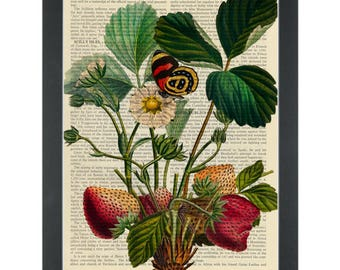 Strawberry vintage botanical drawing Dictionary Art Print