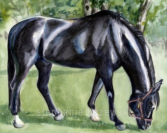 """Black Horse Watercolor Print - Giclee Art Print - 5"""" x 7"""", 8"""" x 10"""", or 11"""" x 14"""" - Hanoverian Horse - Watercolor Painting"""