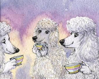 White Poodle 8x10 art print - a cup of tea