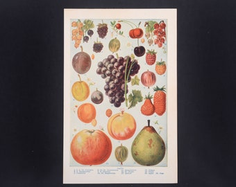 Fruit, vintage fruit print, fruit print, botanical print, kitchen print, fruit poster, vintage botanical, vintage fruit, wall decor