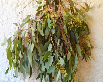 Seeded Eucalyptus Bunch | Eucalyptus Branches | Seeded Eucalyptus Branches | Eucalyptus Garland | Eucalyptus to Make Garlands and Wreaths