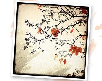 Dream of autumn - Nature - photo art signed 20x20cm