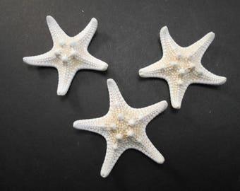 """3 White Knobby Starfish 3-4"""" Beach Wedding Decor Nautical Crafts Hobby REAL"""
