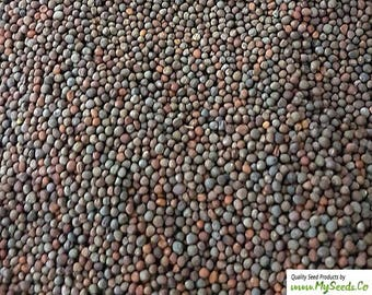 Sprouting Seeds, ORGANIC Broccoli SPROUTING Seeds , Highest quality sprouts, High germination rate