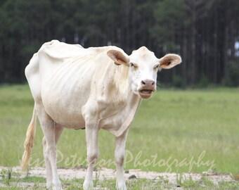 Cow photos. Rustic Country Art Print. Farm animal pics. Green Cream Home Decor, Nursery Wall Art, Cow Lover Gift, Nature wall Art, Cow art