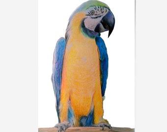 animaux voiture portrait dessin au crayon de couleur