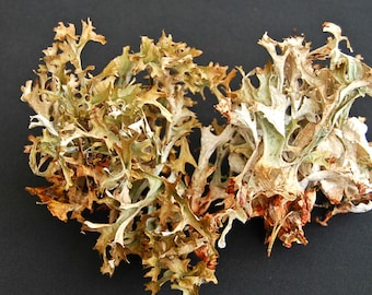 Real lichen, grey big lichen, Dried lichen, for floral decor, terrariums, miniature gardens, fairy gardens, floral supplies, craft supplies