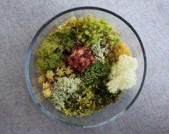 Fresh Live Moss Variety Pack! (Terrarium Assortment Pack)