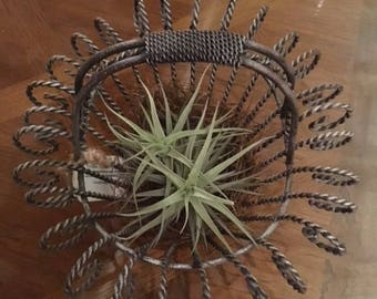 Vintage Wire Basket, Tillandsia, Air Plant, Springtime, Easter Basket, Tisket or Tasket, Farmhouse style, Outdoor Wedding Decor, Rustic