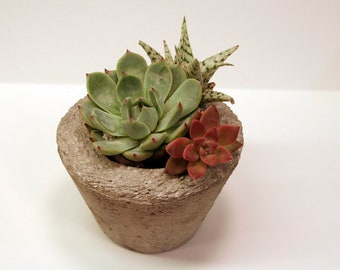 Small round hypertufa pot modern for succulent or cactus