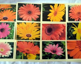 Field of Gerbera Daisies - Notecards