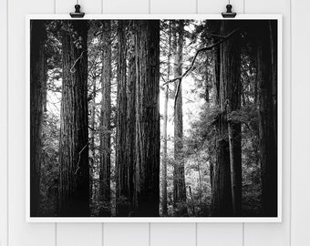 Black and White Photography,Muir Woods Print, Redwood Tree Print, nature print, wall art, California Fine art print, California redwoods