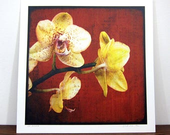 Orchids - expo 30x30cm print - signed and numbered