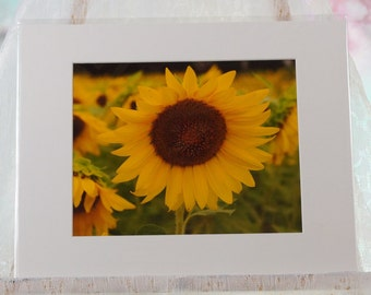 Sunflower photo, matted