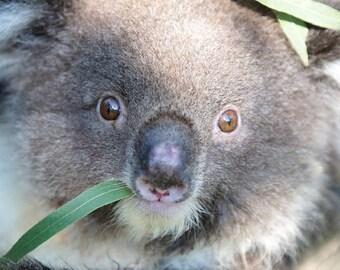 Aromatic Eucalyptus Fragrance Oil (P, S) - 2 oz. & 4 oz. Bottles