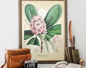 Botanical Print, Rhododendron Print, Home Decor, Rhododendron Botanical,  Floral Botanical Print, Rhododendron Botanical Illustration FL115