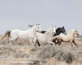 Adobe Family Runs - Fine Art Wild Horse Photograph - Wild Horse - Fine Art Print - Adobe Town