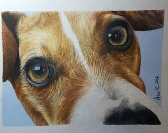 Custom Pet Drawing coloured art pet drawing pet art commissioned art  dog drawing cat drawing