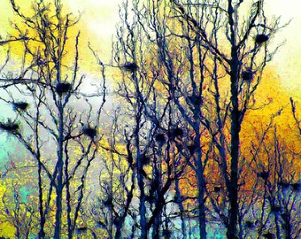 Waiting for Herons 4x6 Fine Art Nature Photograph Art Gallery Quality