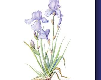 Unique Elegant Fine Art Botanical Greeting Card - Iris Duo