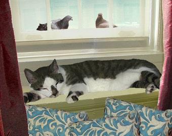 Blank Cards, Cat Art, Handmade, Cat Lovers, Photo Note Cards, Note Card Stationery, Sleeping Cat, Deborah Julian