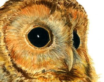 Tawny Owl portrait - Watercolour Art Print (8 x 12 inches)
