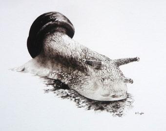 Sale ! Snail giclee print, snail art, wildlife art, snail print
