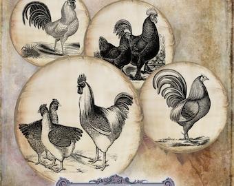 10 Vintage Poultry Circles