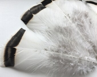 """Turkey Feathers 30 pcs 5-6"""" Royal Palm Turkey Feathers Wedding Feathers Bride Feathers Striped Feathers Feathers for Crafts Rare Feathers"""