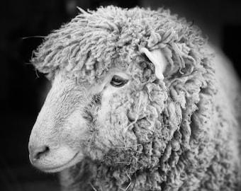 Black and White Sheep Photo, Smiling Sheep Art, Farm Decor, Rustic Wall Print, Close up Nature Photo