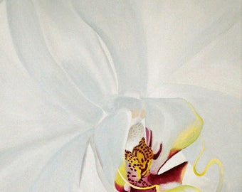 White Orchid Painting - White Phalaenopsis Orchid Flower Macro Fine Art Painting