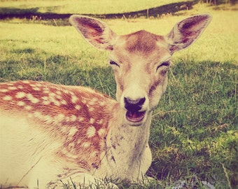 Smiling Deer Photo, Animal Photography, Cute, Fawn, Whimsical, Smile, Fun, Happiness, Nature Decor, Nursery Wall Art - Smiling is Contagiou
