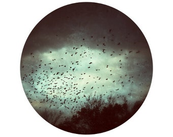 Fall Photo, Bird Photograph, Sky, Clouds, Trees, Black, Grey, Circle, Round Image - 5x5 inch Fine Art Photography Print - Departing