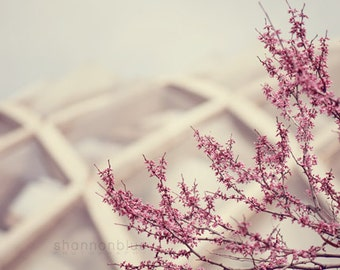 pink spring nature photography / flower, blossom, bloom, purple, lilac, lavender, geometric / redbud / 8x10 fine art photo