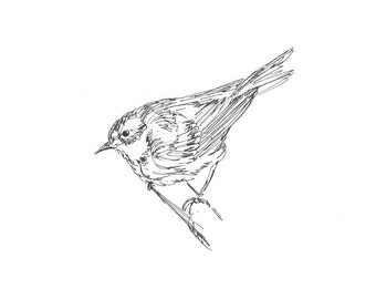 SongBird Art - Giclee Print - Warbler, bird, line drawing, pen ink