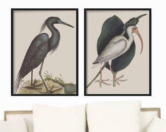Vintage Bird Prints, Bird Prints, Bird Giclee, Bird Art Prints, Antique Bird Prints, Bird Wall Art, Vintage Bird Prints, Mark Catesby Birds
