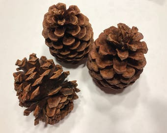 3 large natural pine cones, on avarage 3 - 4 inch