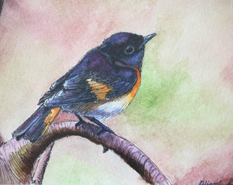 The Redstart - Watercolor Painting Reproduction Print