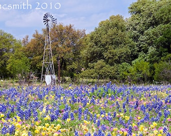 Multiple Colored Windmill Bluebonnets