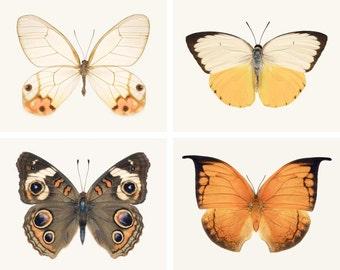 Butterfly Wall Art Set, Fine Art Photography Print Set, Orange, Brown, Yellow, Photo Set, Set of 4 Butterfly Photos, Butterfly Art Print Set