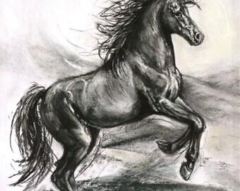 Original horse charcoal drawing-original illustration-original horse-horse decor-'Unbridled'