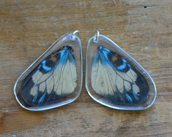REAL Butterfly Wing Charm Preserved in Resin Nature Pendant Preserved Insect Wing  Vintage Jewelry Supplies (BC027)