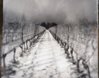 vineyard photo, wine photo, black and  white, snow, wine, winery, home decor, landscape, winter, ontario, niagara, wine country, grapevines