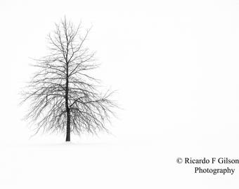 Black and White Photography, Landscape Photography, Winter Landscape, Single Tree Photo, Snow, Tree, Nature Photography, Winter Photography