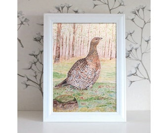Bird illustration, bird watercolor, bird art, bird painting, watercolor painting, watercolor illustration: capercaillie in the woods